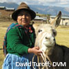 woman and mule (credit: David Turoff, DVM)