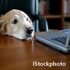 dog at laptop (credit: iStockphoto)