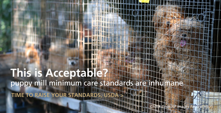 USDA Urged to Improve Care Standards for Puppy Mill Dogs