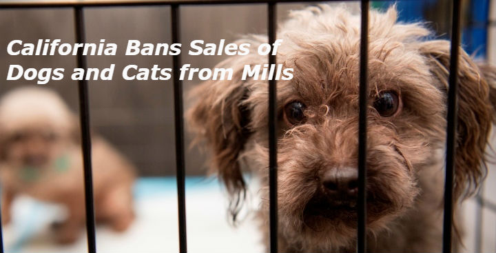 California Bans Sales of Dogs and Cats from Mills