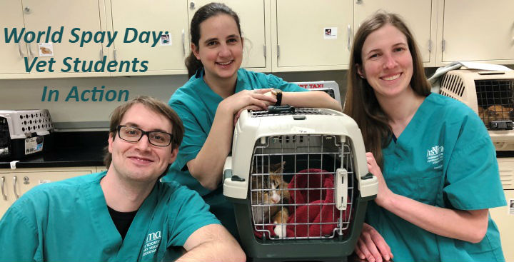 World Spay Day 2018